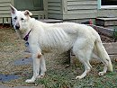Wayde, when he was rescued, shows the typical EPI emaciation
